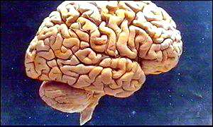 Gene cause of brain disorder identified BBC
