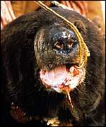 Bear WSPA