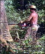 Logger in rainforest