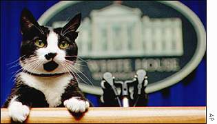 Socks the Clintons' cat