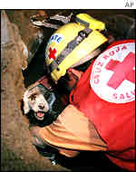 A Red Cross worker rescues a dog in Santa Tecla, El Salvador 15/01/2001