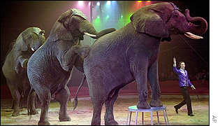Elephants performing at the World Circus Festival