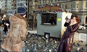 Pigeon feed stall
