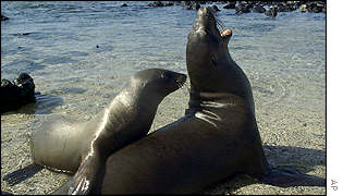 Two sea lions of San Cristobal Island, Galapagos Islands