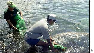 Volunteer cleaners in Galapagos Islands