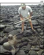 Man inspecting sea lion