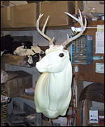 A taxidermy mold