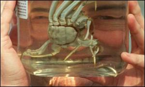 John Prescott and Peter the crab