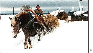Russian farmer hauls hay with a horse