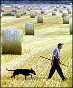Farmer in a hayfield