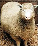 Dolly the sheep PA