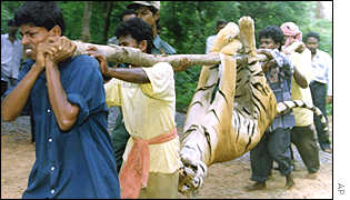 Men carrying dead tiger