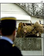French gendarme watches sheep carcasses