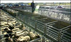 Selby Livestock Auction