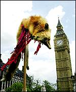 A fox skin in front of Big Ben, London