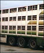 Lorry transporting animals