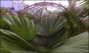Inside the humid tropics biome - Apex Photos