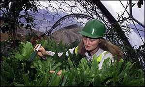 Humid Tropics Biome supervisor Catherine Cutler labels plants - Apex Photos