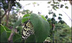 24 males butterflies of various varieties have been introduced into the largest dome - Apex Photos