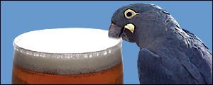parrot with a taste for beer