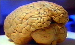 Fruits to increase brain power photo 5