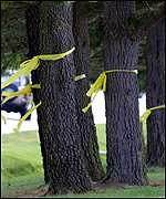 Ribbons have been tied on trees around the Whidbey Island Naval Air Station
