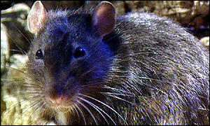 The tests were carried out on rats