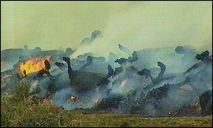 Holstein herd being burned on Ardboe farm