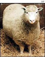 Dolly, the first cloned sheep