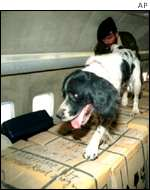 Sniffer dog on plane AP