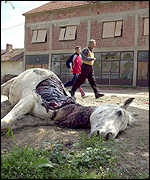 Ethnic Albanians pass a dead horse killed during Macedonian bombings