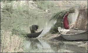 Marsh arabs