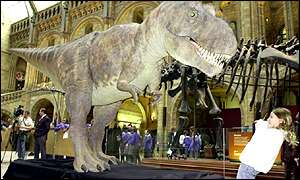 T-Rex at the Natural History Museum