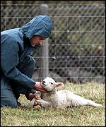 Vet with lamb