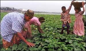 Children harvest crops in Bangladesh