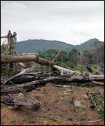 Deforested land BBC