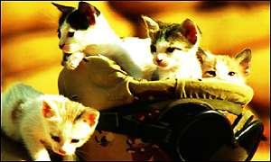 ���� ����.... _1411837_cats300.jpg