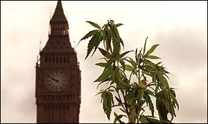 Cannabis leaves in front of the Commons