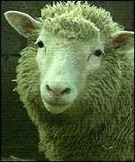 Dolly the sheep BBC