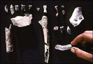 BBC News | SCI/TECH | Teeth and bones stir human debate Fossil Orrorin Tugenensis Was A Partial