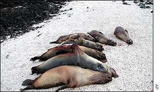 The bodies of seven mutilated sea lions on the southern shore of San Cristobal