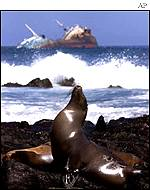 Galapagos sea lion/listing Ecuadorian tanker Jessica in January