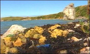 pollution on Anglesey coastline