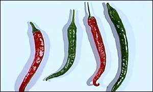 Chillies BBC