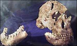 <I>Paranthropus robustus</I>, a hominid line that became extinct about one million years ago