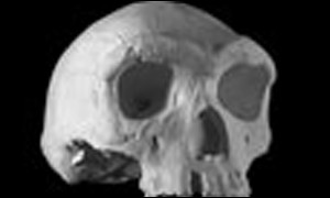 Homo heidelbergensis lived some 300,000 years ago