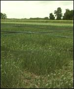 Field of GM crops BBC
