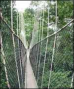 Africa's only canopy walkway in Kakum National Park