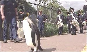 Nils Olav pictured with Norwegian Army in the background