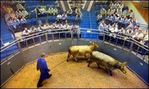Orkney Auction Mart